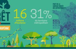 La forêt française est en pleine croissance
